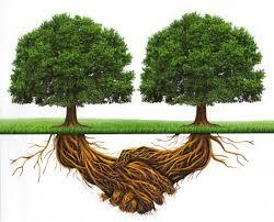piante collaborative